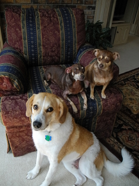 Three dogs: Terry, Coco and Jeremy
